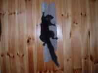 Tanner Wertman Black Squirrel 2013
