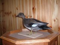 Charles Jones Gadwall Drake 2014