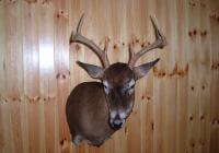 Aggressive whitetail