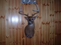 Perry Schenck Buck 2013