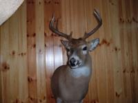 Mike Shaffer Canadian Buck 2013