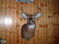 Donnie Hill buck 2014