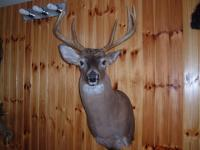 Mantle Buck 2016